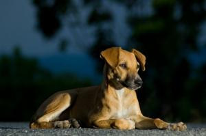 street-dogs-1309344